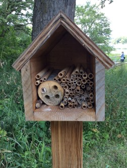 bee-hotel-2-noerenberg-minneapolis-ppa-8-3-16